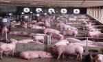 农业部:年出栏5000头猪场需配病死猪冷库