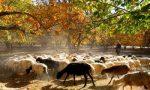 农业部发布2014畜牧业工作要点