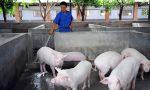 养猪易出现的9种误区