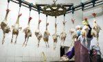 钟南山:逐步取消活禽市场尚有两大现实难题