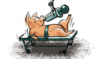 美贸易政策报告促台湾制订进口猪肉瘦肉精标准