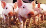 """规模化养殖熨平""""猪周期"""""""