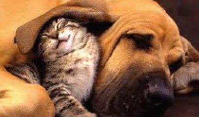 如何降低宠物医院诊疗风险?