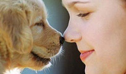 狗碰鼻子的意义——吃了吗您呐?