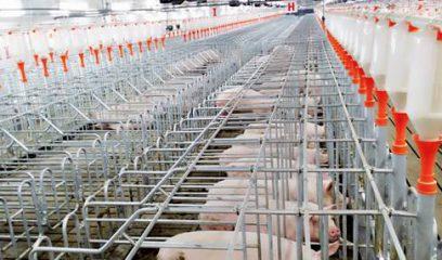 猪场设备企业齐发力,引领2015世界养猪产业博览会参展热潮
