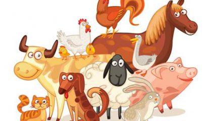 中国动物保健2016年1月新刊试读
