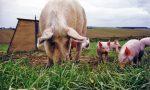 2018年国际养猪繁殖研讨会5月将在长沙隆重召开