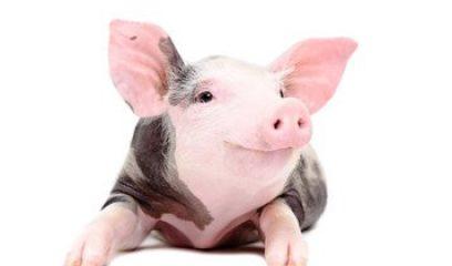 倒计时丨2018世界猪业博览会将于4月30日截止招展!
