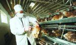 H7N9十大未解之迷