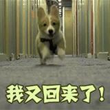 """018中国奶业展览会周报-第11周"""""""